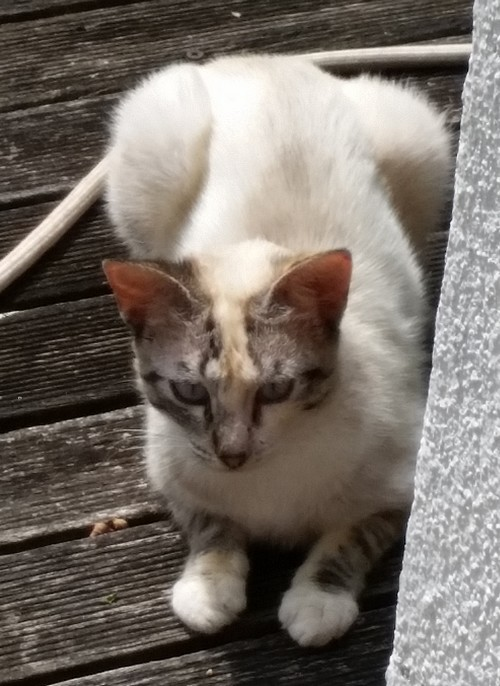 Couleur chat 2018_08_chat2